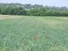 ŽŽitna polja u blizini ŽŽabnice