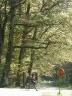 Križanje u šumi Bukovac